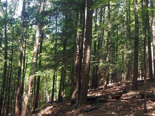 Lewis Creek Forest : Charlotte : Chittenden County : Vermont