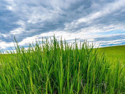 Lone Tree Dryland Farm : Chugwater : Goshen County : Wyoming