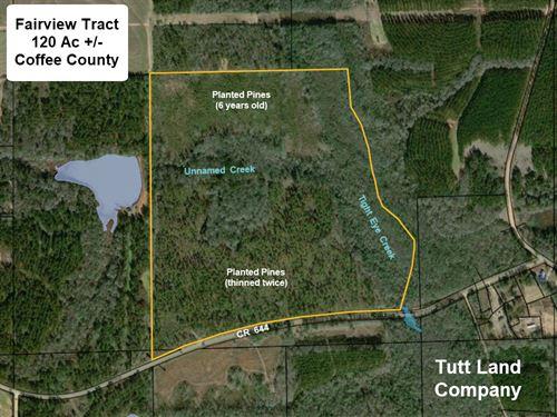 Homesite, Timber, Creeks, Hunting : Samson : Coffee County : Alabama