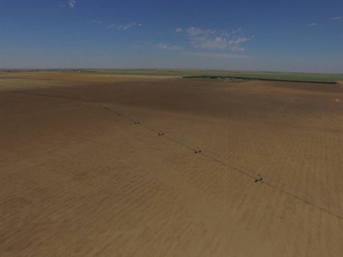 Southwest Kansas Irrigated : Ulysses : Grant County : Kansas