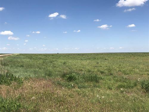 Beaver Creek Birds, Bucks, Grass : Goodland : Sherman County : Kansas