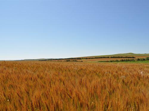 South Dakota Pheasants And Cropland : Winner : Tripp County : South Dakota