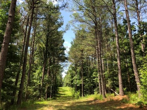 271 Acres In Carroll County In Carr : Carrollton : Carroll County : Mississippi