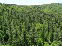 Winooski River Forest : Moretown : Washington County : Vermont