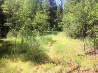 One Of A Kind Mountain Property : Howard : Fremont County : Colorado