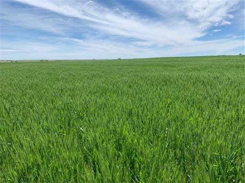 120 Acres of Tillable And Pastu : Phillipsburg : Phillips County : Kansas