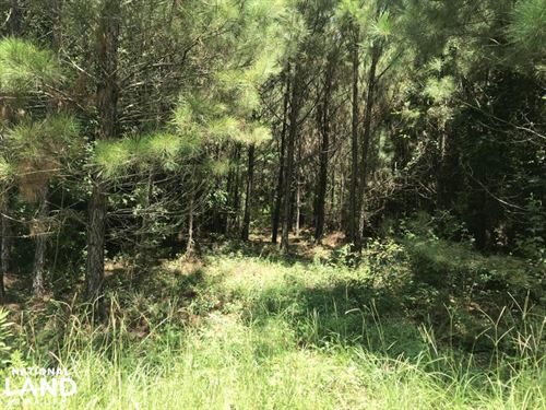 Deer Hunting, Timber Investment Opp : Beekman : Morehouse Parish : Louisiana