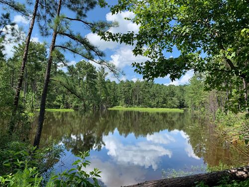 Pine Land, Utilities Small Pond : Chidester : Ouachita County : Arkansas