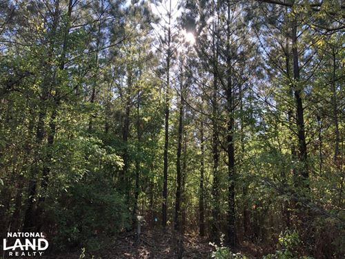 Investment Timberland : Vardaman : Calhoun County : Mississippi