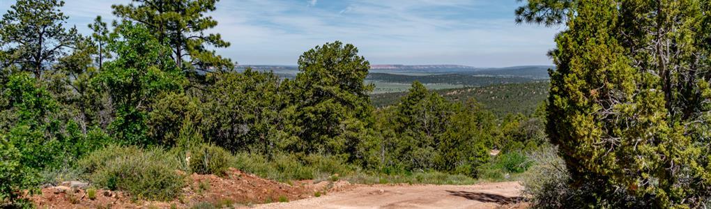 20 Wooded Mountain Acre Homesite : Ramah : Cibola County : New Mexico