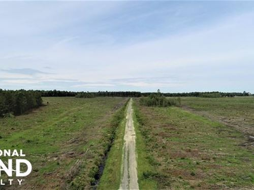 Halifax Hunting Land : Roseneath : Halifax County : North Carolina