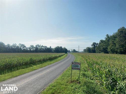 Hoke Secluded Homesite : Shannon : Hoke County : North Carolina