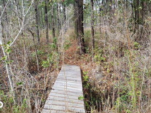 Pender 50 Acres Hunting Land : Burgaw : Pender County : North Carolina