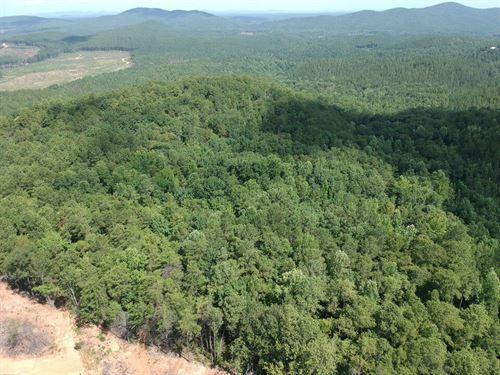 40+/- Acres Of Mature Timberland : Ashland : Clay County : Alabama