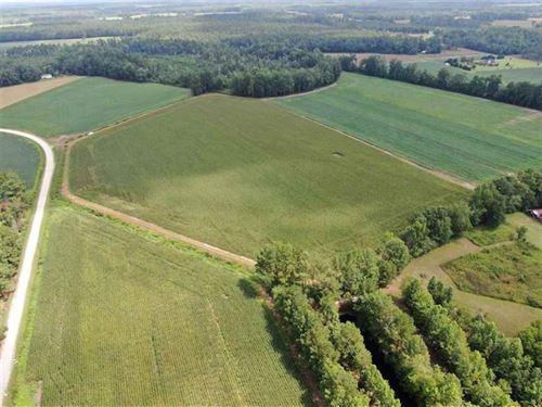 38 Acres of Farm Land For Sale in : Cerro Gordo : Columbus County : North Carolina