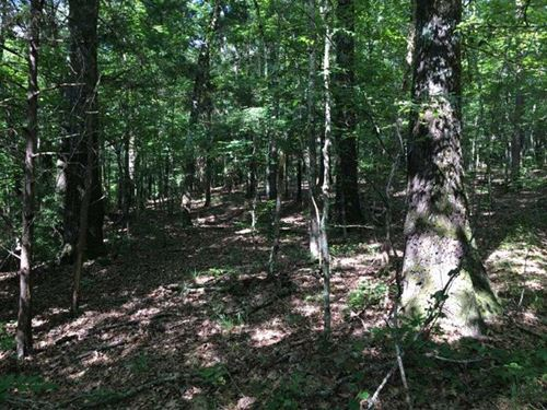 Land For Sale in Holmes County, MI : West : Holmes County : Mississippi