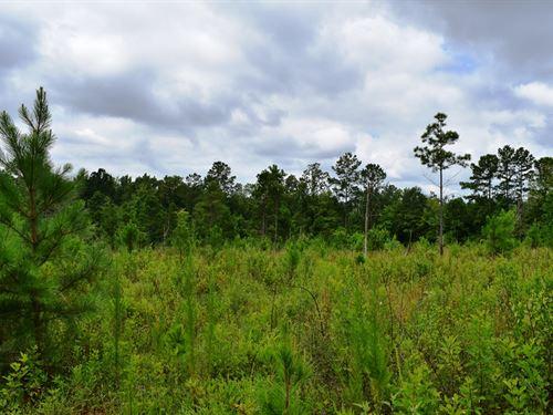 Auchumpkee Creek Tract : Thomaston : Upson County : Georgia