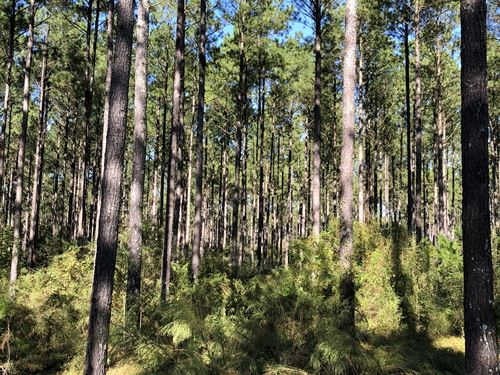 248 +/- Acres Pea River Hwy 153 : Samson : Geneva County : Alabama
