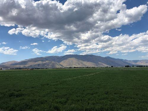 40+ Acre Ranch/Farm Land Water : Smith : Lyon County : Nevada