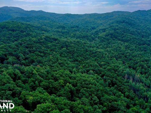 Bearwallow Mountain, Timber, Views : Fletcher : Henderson County : North Carolina