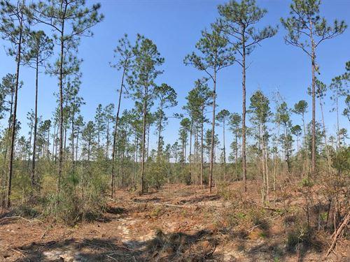 Suedeshoe Tract : Century : Escambia County : Florida