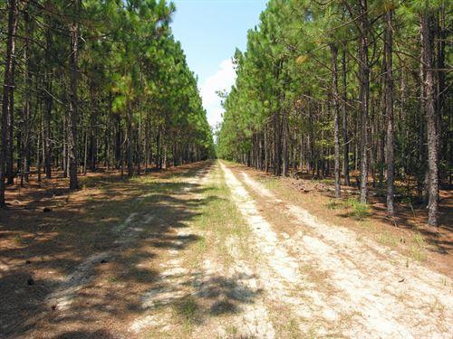 123 Acres Wooded With A Pond : Waynesboro : Burke County : Georgia