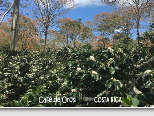 1200 Majestic Ac, For Agro-Tourism : Orosi : Costa Rica