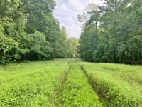 Rivers Run Ranch 765 Acres Hunting : Silver Creek : Lawrence County : Mississippi