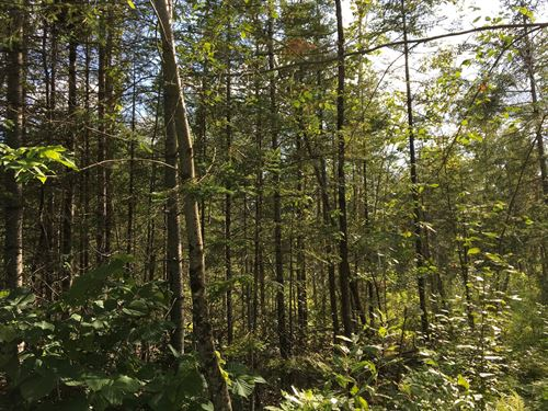Maine Brook Front Land For Sale : Garland : Penobscot County : Maine