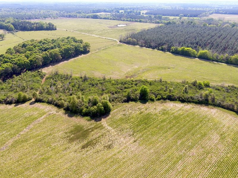 Conecuh Co, Al Row Crop Farm Land : Castleberry : Covington County : Alabama