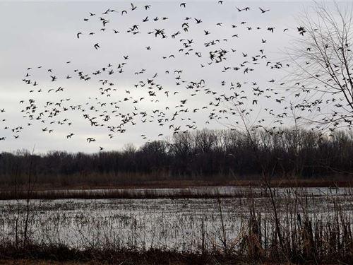 Joco 160 Ducks-N-Bucks : Warrensburg : Johnson County : Missouri
