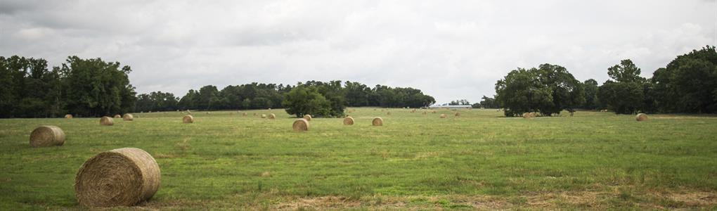 Turnkey Ranch And Poultry Farm : Leesburg : Upshur County : Texas