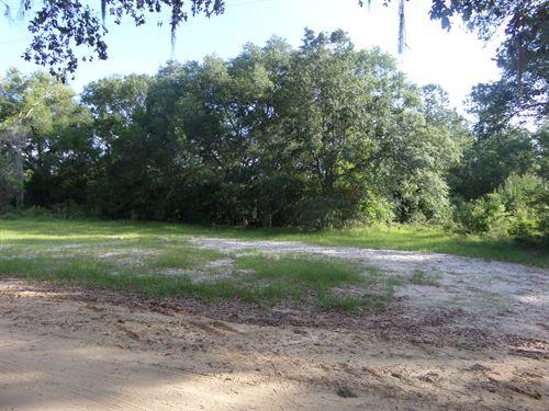 Home Place, Pasture On Lambert Benn : Jesup : Wayne County : Georgia