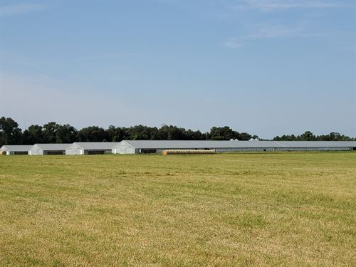 Poultry Broiler, Hay & Cattle : Quitman : Brooks County : Georgia