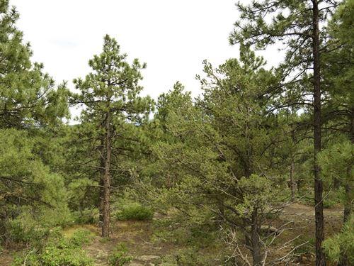 Treed Lot Near Weston, 10Ac +A12-20 : Weston : Las Animas County : Colorado