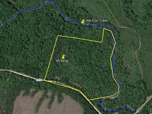 65 Plus Acres Hunting Recreation : Burkeville : Newton County : Texas