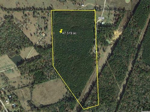47.319 Acres Land Just East Newton : Newton : Texas
