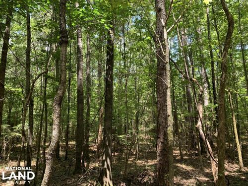Sallis Hunting Land, Timber Investm : Kosciusko : Attala County : Mississippi
