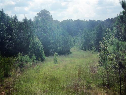 Holly Branch 494.54 : Kosciusko : Attala County : Mississippi