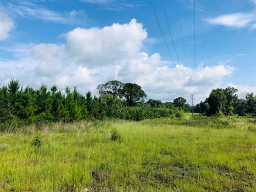 150 Acres-Prentiss, MS : Prentiss : Jefferson Davis County : Mississippi