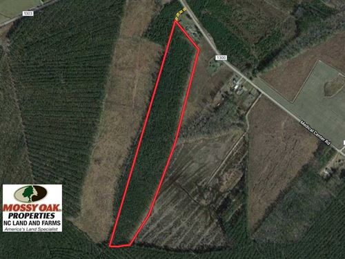 38 Acres of Hunting And Timber Lan : Gates : North Carolina