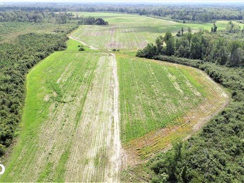 Brimerage Farm : Windsor : Bertie County : North Carolina