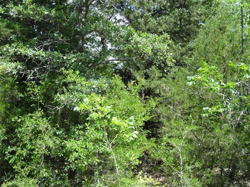 11 Acres In Tx, Owner Financing : Eustace : Henderson County : Texas