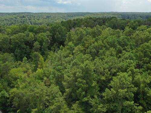 Wooded Acreage : Seneca : Oconee County : South Carolina
