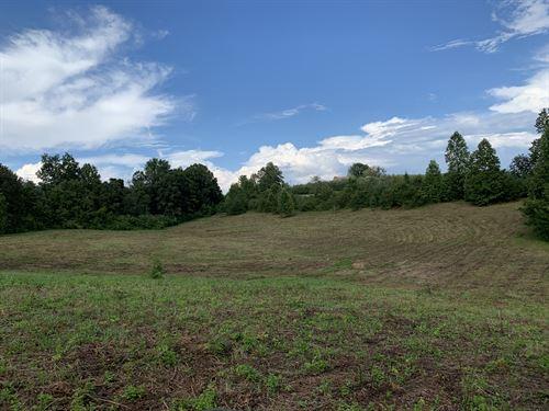 Beautiful Pasture Shade Trees : Long Creek : Oconee County : South Carolina