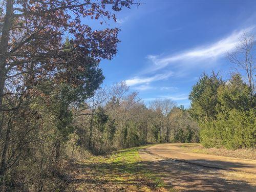 569 Acres Cr 4221 : Jacksonville : Cherokee County : Texas