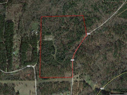 56 Acres of Nice Pine and Hardwoods : Jacksonville : Cherokee County : Texas