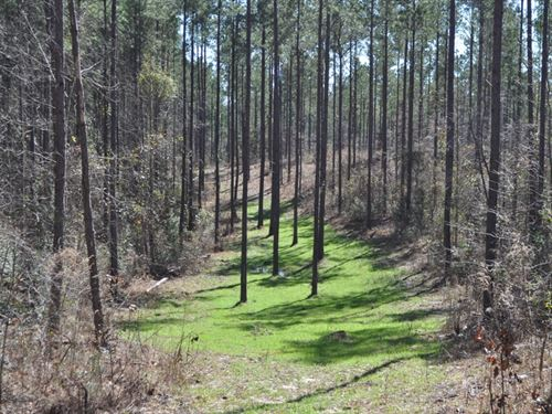 Excellent Hunting And Timber Tract : Gordo : Pickens County : Alabama