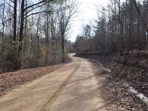 Diverse Timber And Hunting Tract : Gordo : Pickens County : Alabama