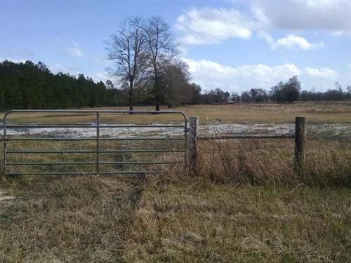 30 Acres, Stocked Pond : Hortense : Wayne County : Georgia